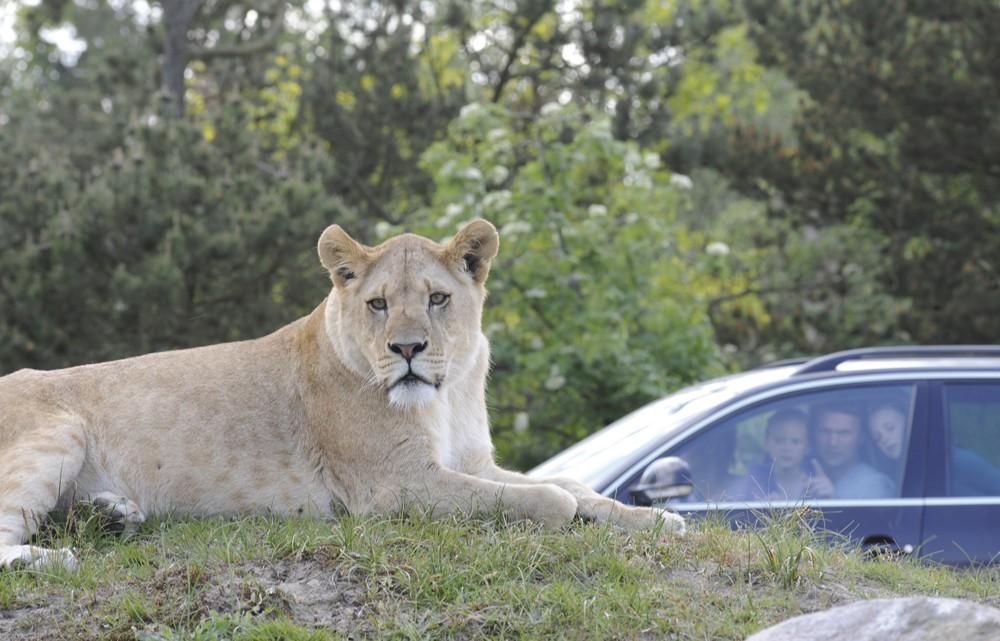 Foto: Givskud Zoo/akz-o